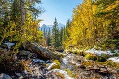 Assaisonnez la neige et les arbres changeants et premiers d'automne Photo stock