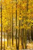 Assaisonnez la neige et les arbres changeants et premiers d'automne Photos libres de droits