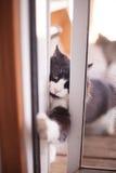 Assaltantes de gato Foto de Stock