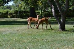 Assamboin公园温尼培 库存照片