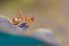 Assassin bug Royalty Free Stock Photos