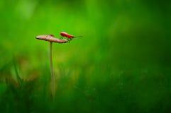 Assassin bug on a mushroom Stock Photo
