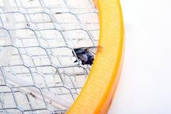 Assassino do mosquito Foto de Stock Royalty Free