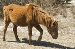 Assataque-Pony Lizenzfreies Stockbild