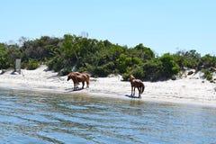Assateague Island, Maryland Royalty Free Stock Photos
