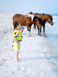Assateague Ponies & Young Boy. A young boy and the wild ponies of the Island are all looking at something in the water Stock Photography