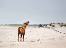 Assateague Wild Pony Royalty Free Stock Photos