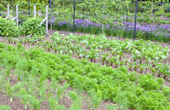 Assegnazione di verdure della comunità in villaggio rurale inglese Fotografia Stock Libera da Diritti