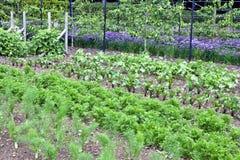 Assegnazione organica della frutta e della verdura di estate Immagini Stock