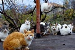 Assemblée des chats. Image libre de droits