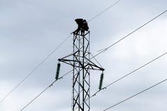 Assemblaggio ed installazione di nuovo supporto di una linea elettrica Immagini Stock
