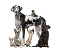 Assembly of cats and dogs, isolated. On white royalty free stock images