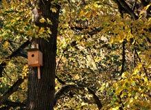 Assentamento-caixa dos pássaros Fotografia de Stock