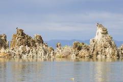Assentamento da águia pescadora sobre tufos Imagens de Stock Royalty Free