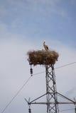 Assentamento da cegonha na torre elétrica Imagem de Stock