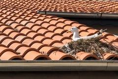Assentamento da gaivota de mar no telhado imagem de stock