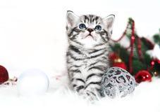 Assento bonito listrado do gatinho sob a árvore de Natal Foto de Stock