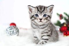 Assento bonito listrado do gatinho sob a árvore de Natal Imagens de Stock Royalty Free