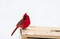 Assento cardinal na vara. Fotos de Stock