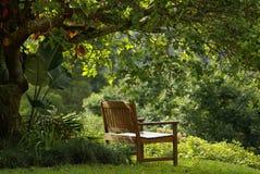 Assento da floresta Fotos de Stock Royalty Free