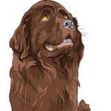 Assento da raça do hound de Terra Nova do cão do esboço ilustração do vetor