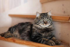 Assento do gato Imagem de Stock Royalty Free