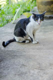 Assento do gato Fotografia de Stock