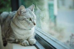 Assento do gato Fotografia de Stock Royalty Free