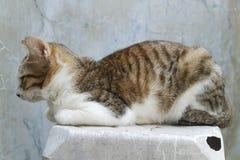 Assento do gato Imagem de Stock