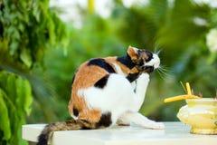 Assento do gato relaxado na tabela de mármore branca foto de stock