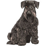 assento preto do cão do Schnauzer diminuto do vetor Foto de Stock Royalty Free