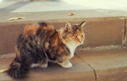 Assento vermelho do gato Fotos de Stock
