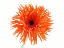Assez dans l'orange Photographie stock libre de droits