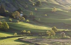 Assez peu d'arbres de Langdale Images stock