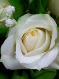 Assinatura do amor Imagens de Stock Royalty Free