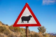 Assine o aviso sobre carneiros na estrada em África do Sul do norte Imagens de Stock Royalty Free