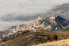 Assisi, horse and fog Royalty Free Stock Image