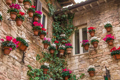 Assisi windows with potted plants and ivy. Stock Image