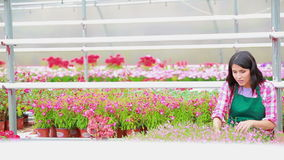 Assistant standing at the greenhouse working Royalty Free Stock Photography