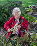 Assisted Living Gardener. A happy elderly woman in a wheelchair prunes her rosebush in an assisted living residence garden royalty free stock image