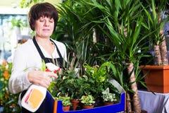 Assistente che mostra varietà di piante verdi Immagini Stock Libere da Diritti