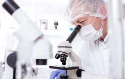 Assistente de laboratório no laboratório da qualidade de alimento Ensaio da cultura celular para testar a semente genetically alt fotografia de stock royalty free