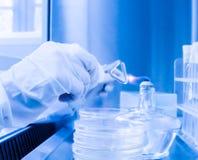 Assistente di laboratorio in un ambiente sterile per il micro-campionamento immagini stock
