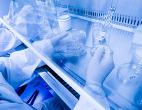 Assistente di laboratorio in un ambiente sterile per il micro-campionamento fotografie stock libere da diritti