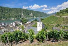 Assmannshausen, Rheingau, Hesse, Rhine rzeka, Niemcy fotografia royalty free