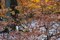 Assoalho coberto de neve da floresta foto de stock royalty free