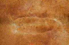 Assoalho concreto manchado rachado Fotografia de Stock