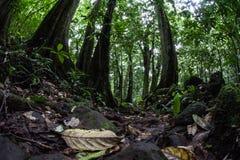 Assoalho da floresta úmida tropical Fotografia de Stock Royalty Free