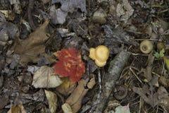 Assoalho da floresta com folha e cogumelo imagem de stock