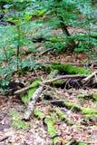 Assoalho da floresta com ramos imagens de stock royalty free